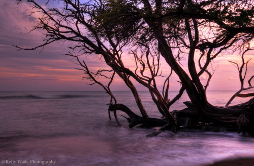 Lahaina Sunset (by nikonkell Kelly Wade Photography)