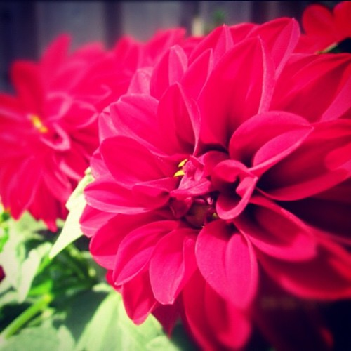 Via @xiby_: #flower from my friend's yard