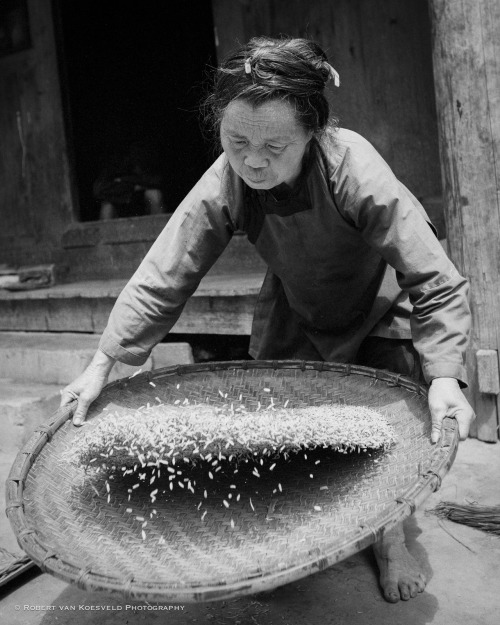 Guizhou 05  Grains of rice dance as this villager winnows part of her harvest. A scene I stumbled on as I wandered through her village in Guizhou, China while researching locations for the photo trip I will lead in May 2013. Details soon. Series Link
