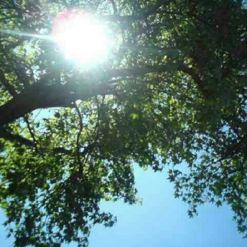 #20daychallenge #day7 #nature the sun looking through the trees :) #pretty (Taken with Instagram)
