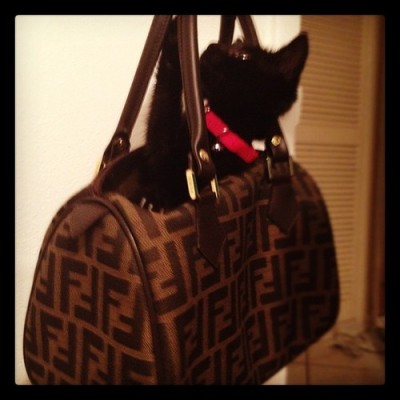 Luna only travels in style #designerkitty #lunaprobz #fendi ✌ by steph_marti