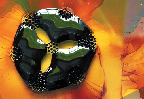 A drop of ferrofluid is shaped by seven small circular magnets sitting beneath the glass and paper. Ferrofluids are made up of nanoscale ferromagnetic particles suspended in a carrier liquid. Under the influence of magnetic fields, they can take on fantastic shapes, including sharp-tipped droplets and labyrinthine mazes. This image is taken from the National Academy of Science's book Convergence, focused on the intersection between science and art. (Photo credit: Felice Frankel)
