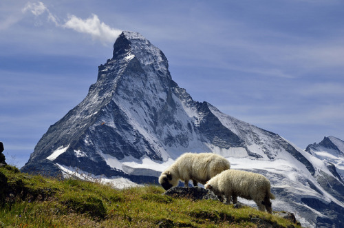 Matterhorn (Monte Cervino) seen from Höhbalmen, typical Switzerland (by pierre hanquin).