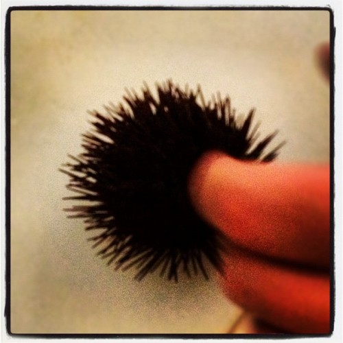 Sea Urchin (Taken with Instagram at Mikamai)