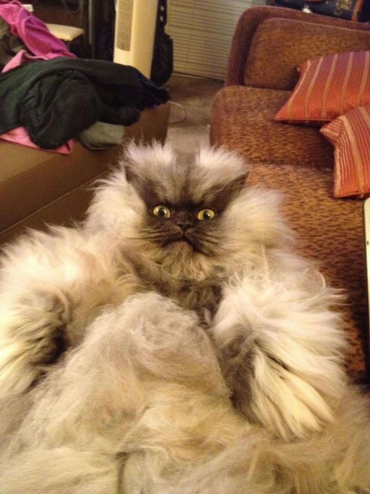 bunnyfood:  (via Colonel Meow)  that's a god damn wookie