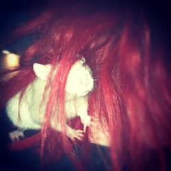 Rat in my hair!