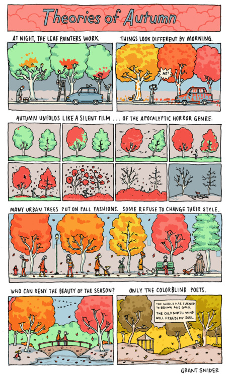 nevver:  Theories of Autumn  urban tree theory ^^