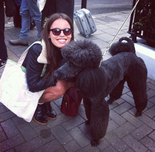 rev-els:  the dog looks like it has a sock bun on its head, lol, but it's still cute