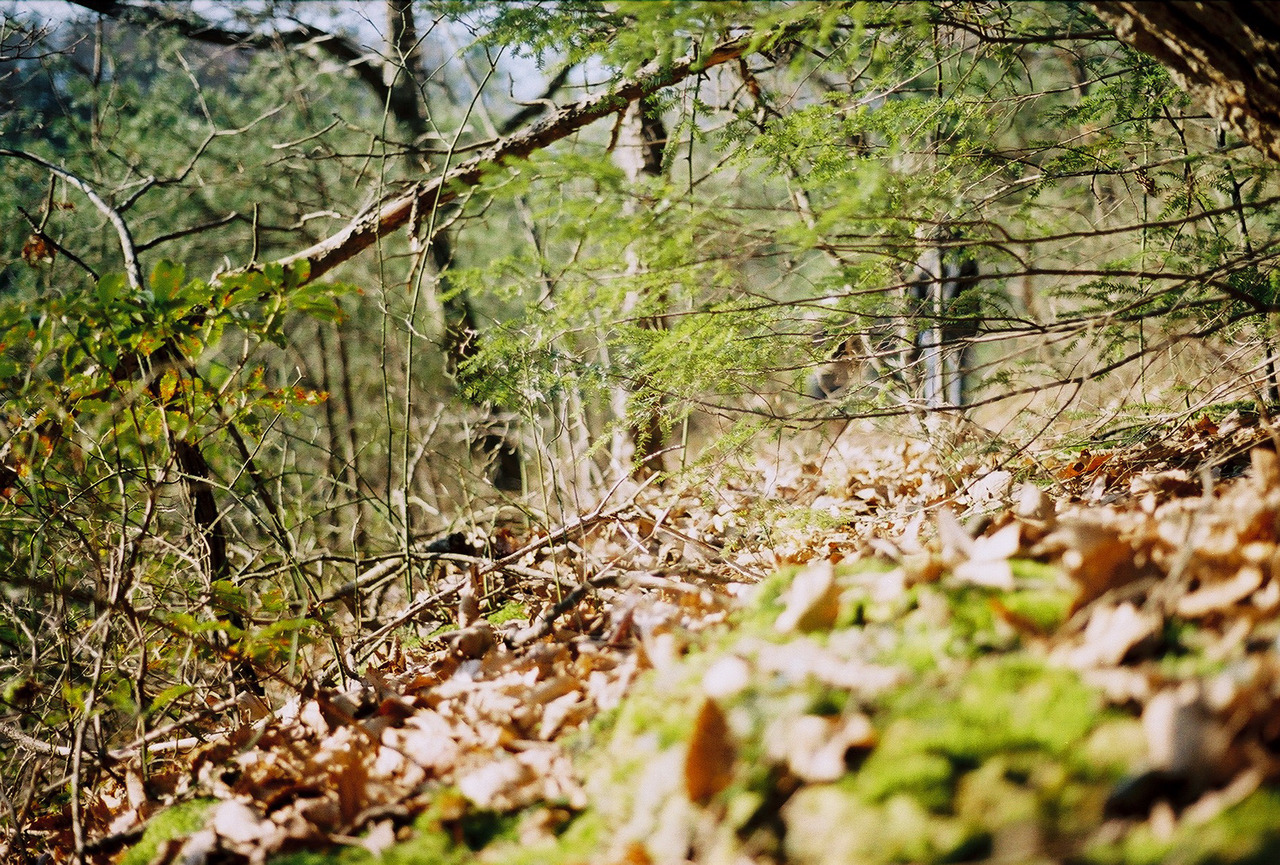 sapshas:  Ridge Path. Logan, Ohio - 50mm Minolta ASA 400