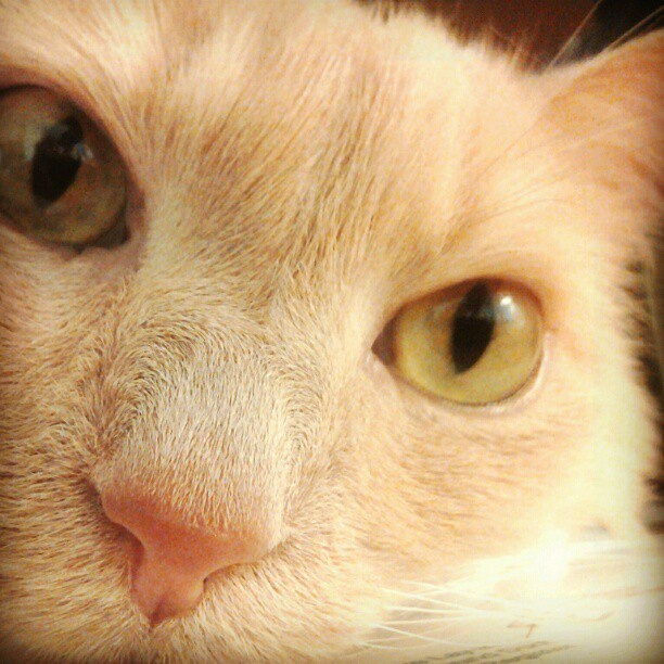 Kitty love #cat #face #love #sweet #catinmyface (Taken with Instagram)