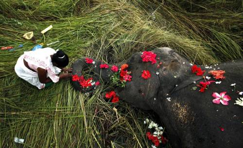 Indian Villager Pays Her Respects To Elephant Hit By Train