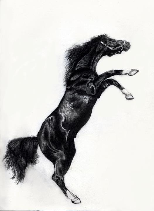 rizwansartgallery:  A black horse done using pencil