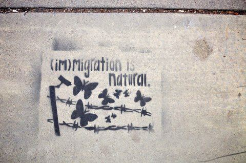 gaivota:  (im)migration is natural