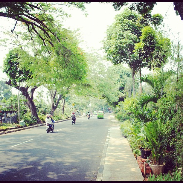#morning #instahub #indonesia #instagood #iphonesia #bogor #green #boulevard #instagrunge #tree #idinstagram #street #instawsome (Taken with Instagram)