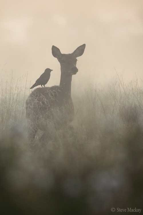 spiritualdrgnfly:  early morning ride