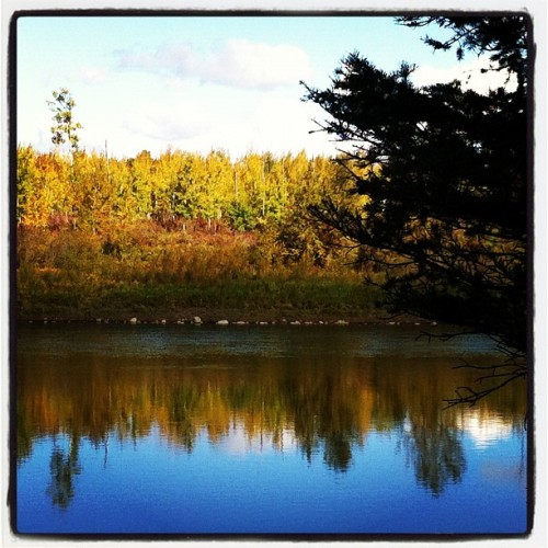 Beautiful fall colors on the North Saskatchewan River (Taken with Instagram)