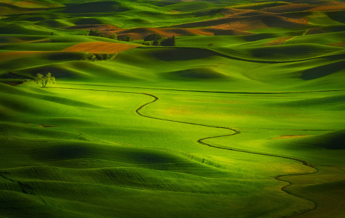 "Fields of Green, Palouse, Washington , (via 500px / Photo ""The Prom Queen"" by Miles Morgan)"