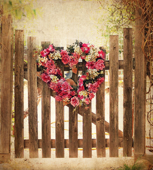 lillypotpie:  garden gate and pop of pink by champbass2 on Flickr.