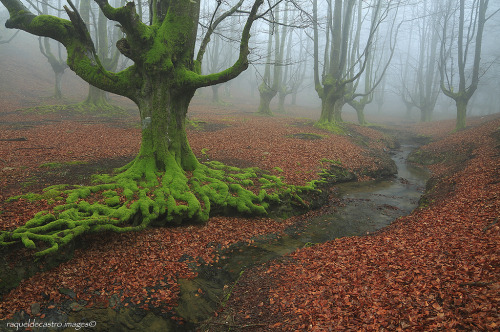 woodendreams:  (by Raquel de Castro)