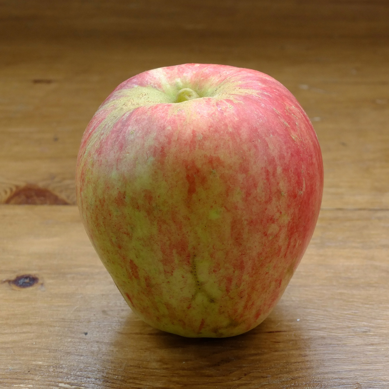 "The Bardsey Apple - a story for foodies everywhere… The Bardsey Apple is a bit of a rarity. Bardsey - Ynys Enlli in Welsh - is a small island off the tip of the Lleyn peninsular at the north end of Cardigan Bay. It has a religious history with a monastery having been founded there in the 13th Century. However, pre-Roman Celts are believed to have visited the island to pray and probably die while chasing the setting sun. In 1998 one of the wardens on the island used some windfall apples from under an old tree to bait a mist net, which is used to catch birds; the birds are then ringed for research purposes. He noted that the apples were disease free. Unable to identify the apples they were sent to the UK National Fruit Collection in Kent where it was determined that the fruit and tree were unique. Thus, the tree obtained the title of ""the rarest tree in the world""! From the original tree on the island it has been possible to produce further trees and a good friend was given one as a gift. This year it's produced a single fruit - the one in this post! The tree was probably pollinated by a neighbours bees so it is keeping a very tight grip on its Welsh heritage. The apple is very tasty, slightly tart, with a good crunch. This one may have needed a little more time on the tree.  Read much more here at the Bardsey Apple homepage…"