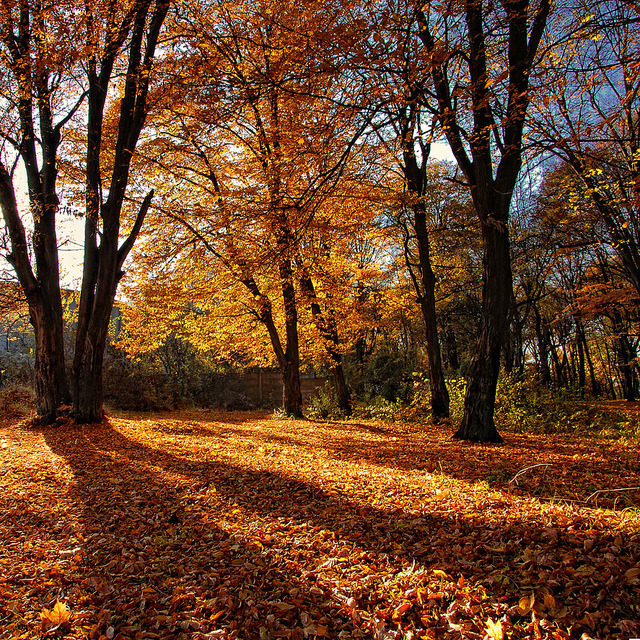 Autumnal Shadows - In Explore by 23gxg on Flickr.