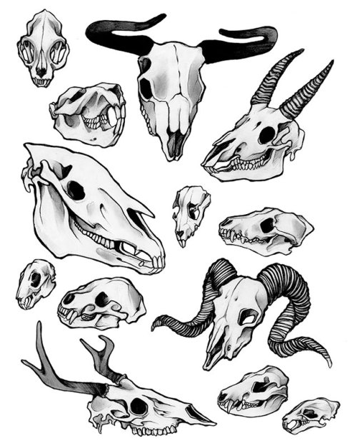 "North American Mammals, Graphite, 11"" x 17"", 2012.  I have a new design up on Threadless! Please vote for it here."