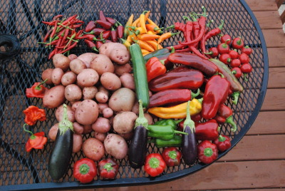 This is a sampling of my garden's crop from a couple days ago… It could come to a halt here pretty soon, but what an amazing year!!