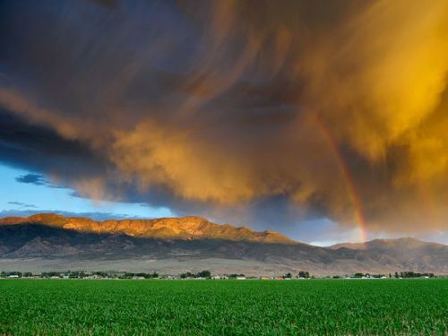 storm clouds move in over a utah cornfield at sunset.                                                                                                                                                 photography by steven besserman