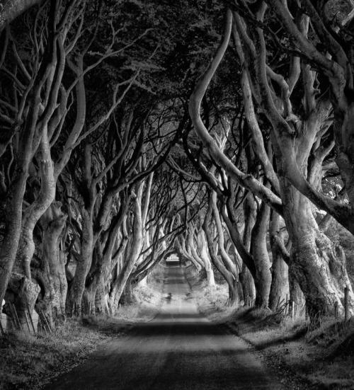 The Dark Hedges © Kieran BarberThe Dark Hedges is a unique stretch of the Bregagh Road near Armoy, in Ireland, that looks like something from a Tim Burton movie. Over the past 300 years or so, the Beech trees guarding either side of the lane have reached up and across to each other, becoming heavily intertwined to create a natural arched tunnel where shadow and light plays through entwined branches. Read more about this unusual place in Ireland here:   http://www.amusingplanet.com/2012/02/dark-hedges-in-ireland.html