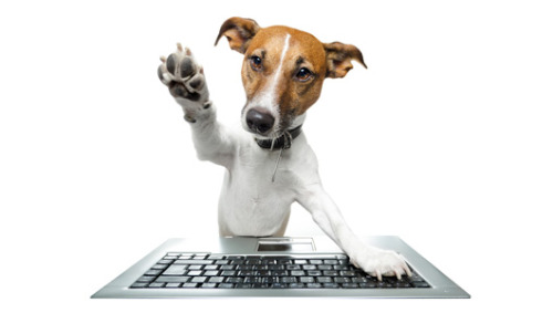 5 addictive pet websites worth a bookmarkResistance is futile. We've got the Crocodile Hunter's adorable kids, smiling dogs and professional pet photography. (Don't say we didn't warn you.)