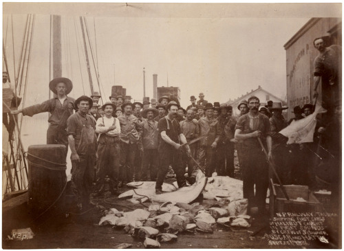 "todaysdocument:   ""…Shipping first cargo of halibut caught in Puget Sounds by crew of schooner Oscar and Hattie. September 20, 1888."" By N. B. Miller.  In 1887, the U.S. Fish Commission sent the steamer Albatross on a three-year voyage to explore fishing grounds and gather data on the commercial fishing industry in the northeastern Pacific and Bering Sea. On a stop in Tacoma, Washington, its photographer captured these proud crewmen from the Oscar and Hattie showing off their catch. via DocsTeach"