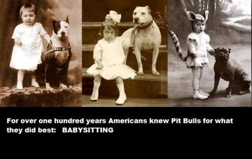 """For over one hundred years, Americans knew Pit Bulls for what they did best: BABYSITTING!"" (Pit Bulls are some of the sweetest dogs I've known - the ones that haven't been ruined by human monsters, that is.)"