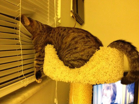 its-a-cat-world:  Outside is so exciting.