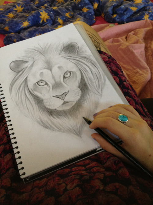 Lion drawing :)