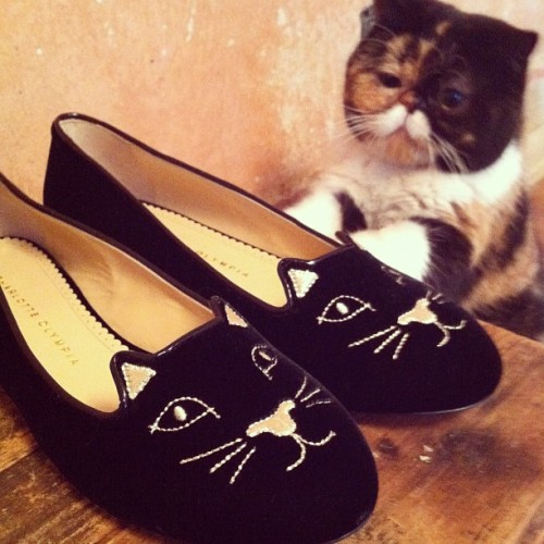 pudgethecat:  I can has these shoes?