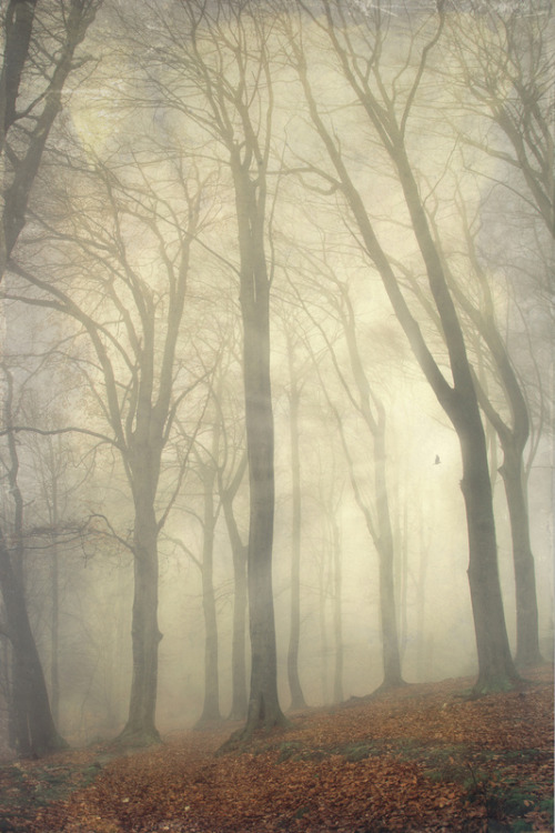 high rising trees III by Dirk Wuestenhagen