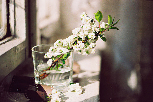 claefer:  Untitled by xenna993 (on Flickr)