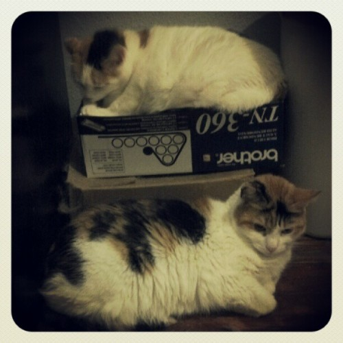 Tara and Hermione just laid back chilling. (Taken with Instagram)