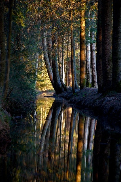 bnlymedia:  Dark Forest, Nagel, Bavaria, Germany