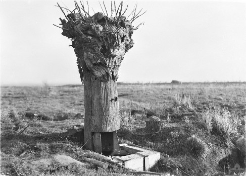 Observation Trees, 1914-1918 Observation posts made of lumber and sheet metal to look like tree trunks are among the latest disguises employed on the battle front to deceive the enemy and enable watchers to occupy positions of advantage.