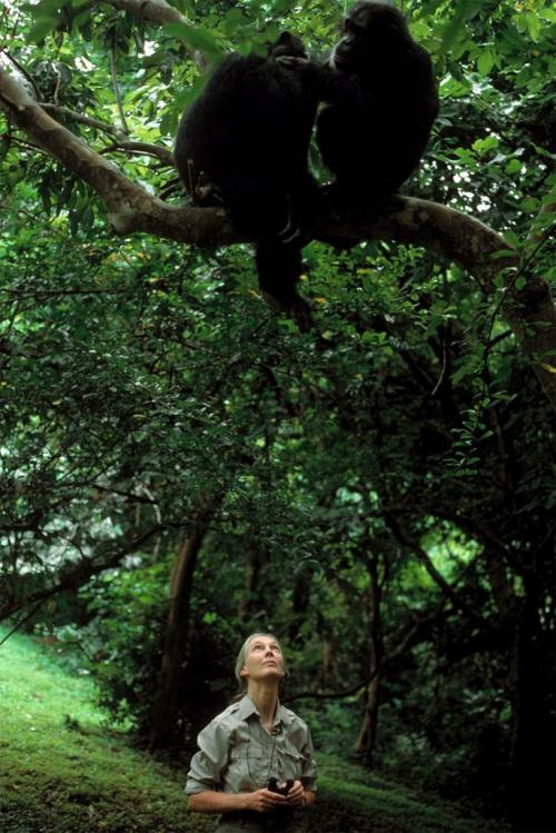 Jane Goodall in Tanzania in 1989, By Chris Steele-Perkins