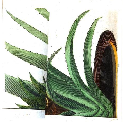 theartofgooglebooks:  Plate left folded. From A Treatise on the Ananas or Pine-apple by Adam Taylor (1769). Original from Oxford University. Digitized May 15, 2006.