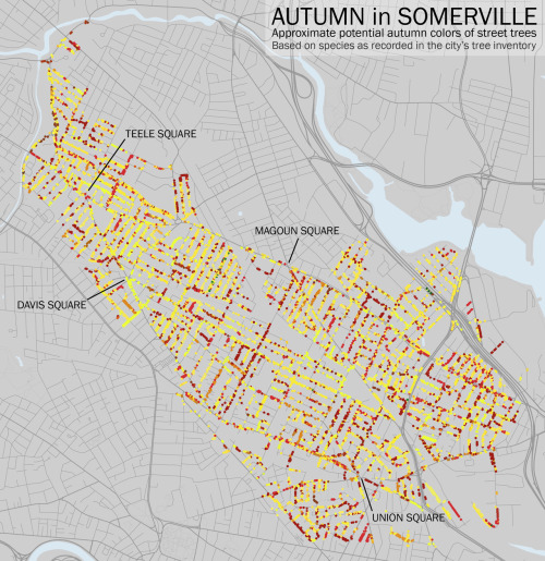 michellecallinan:  Map of the month- Bostonography's 'Autumn Streets' map .. While approximate, the graphic diagrams the potential fall foliage of Somerville using city tree data and typical species behavior. There's quite a bit of red on my street, I can't wait!