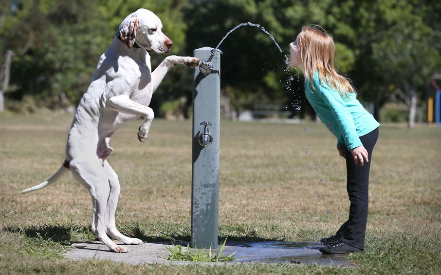 says-lets-build-a-home:  Jack the English Pointer gives Lauren Rowe a drink from a water fountain on the first day of Spring in Brisbane, Australia. Picture: Newspix/Rex Features