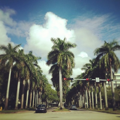 #palmtreeu #miami #florida  (Taken with Instagram)