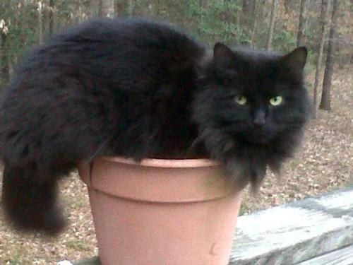 get out of there cat. you are not a plant. you do not blossom beautifully in the sun.