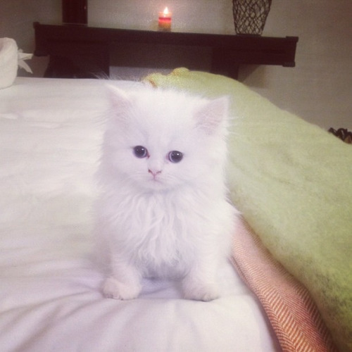 Little kitten Mercy given by Kanye to Kim for her to be companied with when she's in Miami filming KKTM and he's not around