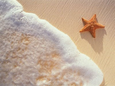 reloveplanet:  ☺ The Starfish Thrower ☺