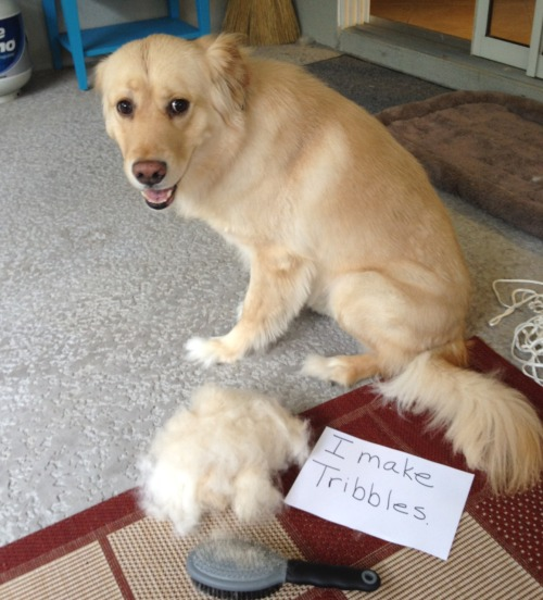 dogshaming:  I make tribbles.  Editor's note: set phasers to cute!