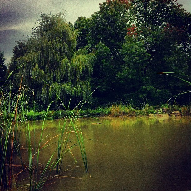 My favorite spot on a rainy day. Home.  (Taken with Instagram)